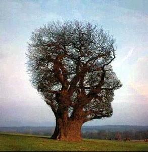 arbre-homme